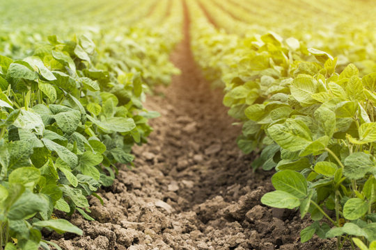 organic vegetable garden,future agriculture for safety food
