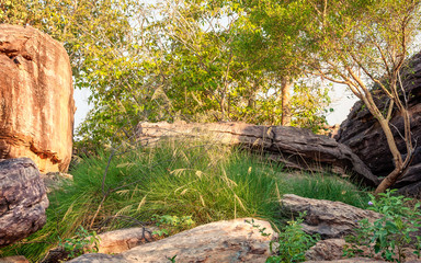 Golden hour in Kakadu National Park, Northern Territory, Australia. The beginning of the dry season makes hiking a pleasure, golden gum trees, and green grasses are covering the rocky escarpment.