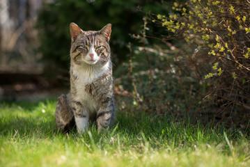 Ładny kotek pozuje w ogrodzie.