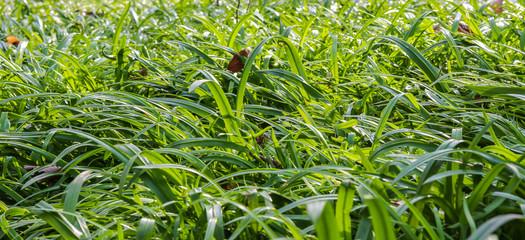 Undurchdringliche Graslandschaft