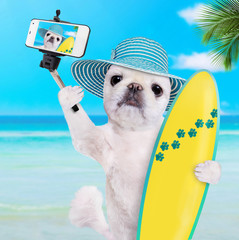 Beautiful surfer dog on the beach taking a selfie together with a smartphone.