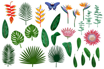 Tropical Vector Elements Collection