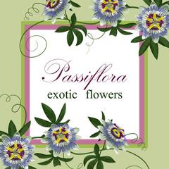 Passiflora Exotic Postcard