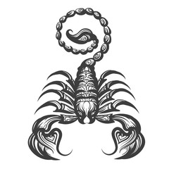 Scorpion engraving illustration