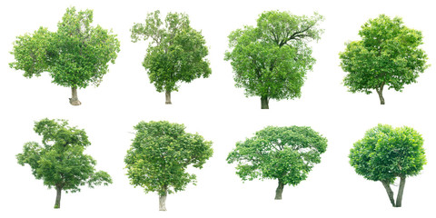 Group of tree on white background