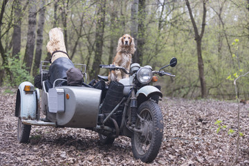 Dog and old motorcycle