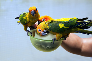 small colorful parrots