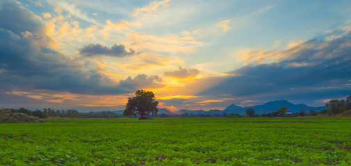 Landscape of sunset at peanut farm.