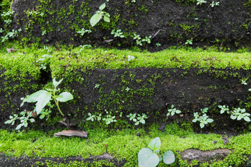old brick wall grown with grass and moss,soft focus