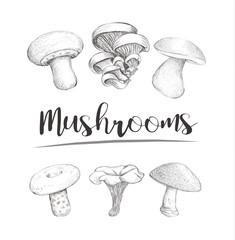 Mushrooms sketch vector hand illustration. Set mushrooms