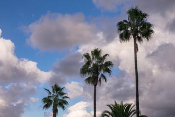 Palmen vor Wolken am Himmel