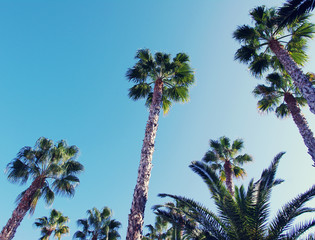 Summer background with Palm tree against sky. Sea tour.