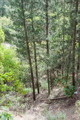 Path between trees in national park near the town Nesher