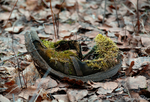 Old forest boot