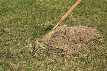 Spring care for lawn, manual scarification of lawn with fan rakes.