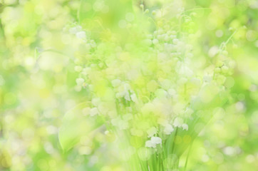 lily of the valley blur bokeh summer background