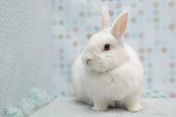 Cute little white rabbit at home