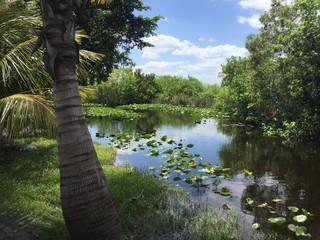 Paysage de Floride marécageuse