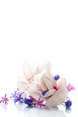 Set of spring flowers with magnolia