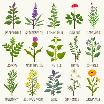 Herbs vector set