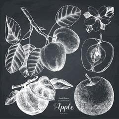 Vintage set of apple sketch