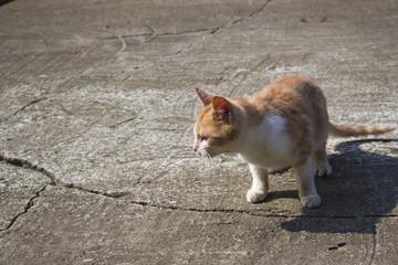 The kitten of orange colour