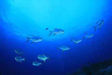 Pompano fish in ocean