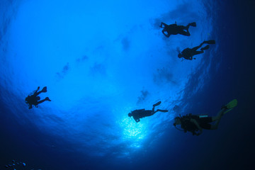 Scuba dive. Underwater group of scuba divers in sea