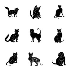 Collection of cats in one picture. Different cats in one picture. Cat breeds icon in set collection on black style vector symbol stock illustration.