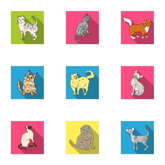 Collection of cats in one picture. Different cats in one picture. Cat breeds icon in set collection on flat style vector symbol stock illustration.
