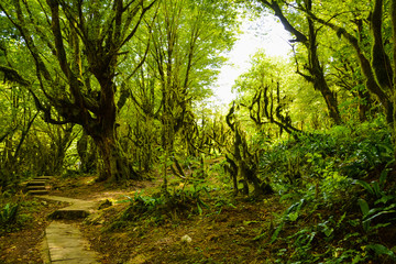 The path in a dense dark overgrown forest on a summer day