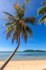Coconut tree on the beach and sea with clear blue sky.