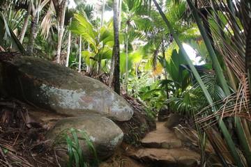 Palm Trees / Vallée de Mai Nature Reserve, Praslin Island, Seychelles, Indian Ocean, Africa. The park is the habitat of the endemic coco-de-mer palm tree.