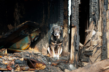The dog continues to guard the house that was burnt by the fire.