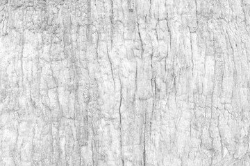 White Bark Texture Background.