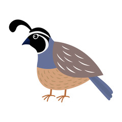 Quail bird. Cute cartoon character. Flat design. Isolated. White background.