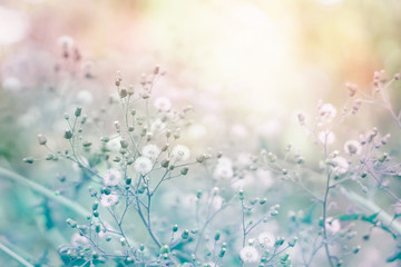 grass flower field in spring background with sunlight