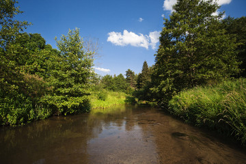 A fast forest river. sunny weather. Blue sky with clouds. Bright colors of summer