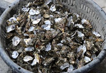 Abandoned oyster shells