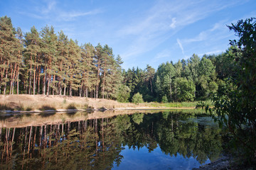 Forest Lake. Bright sunny day. Reflection of trees in water