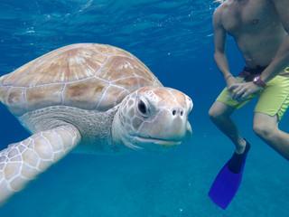 Sea Turtle vacation