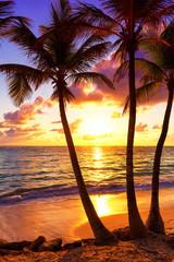 Coconut palm trees against colorful sunset in Saona island. Caribbean sea, Dominican Republic