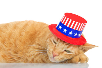 Tabby cat laying on a reflective surface with white background, sleeping with a patriotic 4th of July hat on.