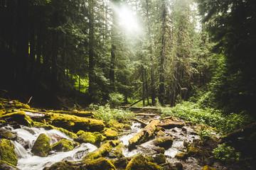 Rocky Stream Flowing Through Lush Forrest