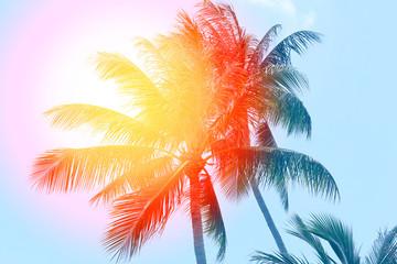 Retro photo of a beautiful of palm trees