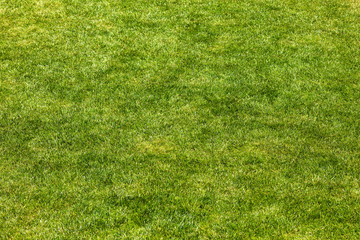 Green manicured grass