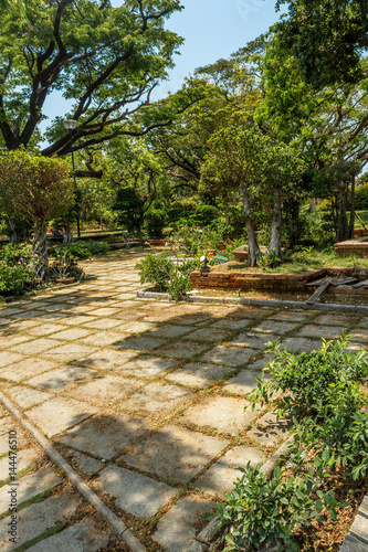 Wide view of green garden with grass, trees, plants, shadows and