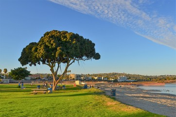 Late winter afternoon at park on Mission Bay, San Dieg