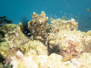 Banc de poissons et coraux