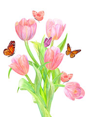 bouquet of tulips with butterflies are flying around for your design. watercolor painting
